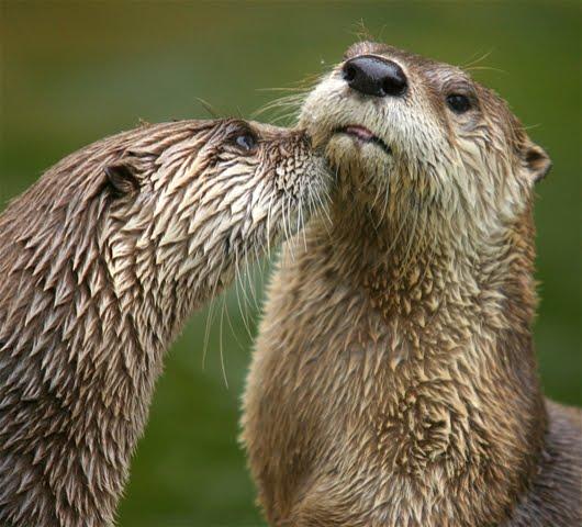 Photographs Of Animals Top Best Animal Photographs