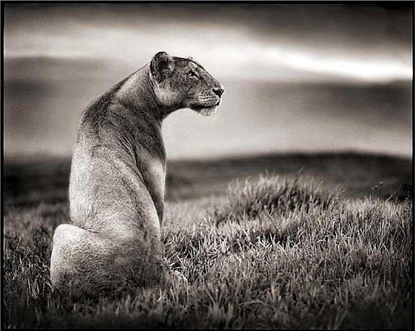 Animals Photography Animal Photo