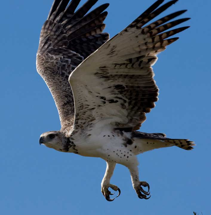 Animals Zoo Park Birds Flying Flying Birds Pictures And