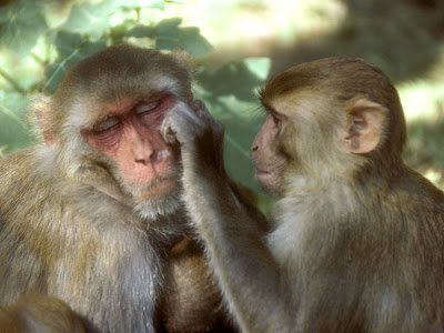 Pictures of Funny Monkeys