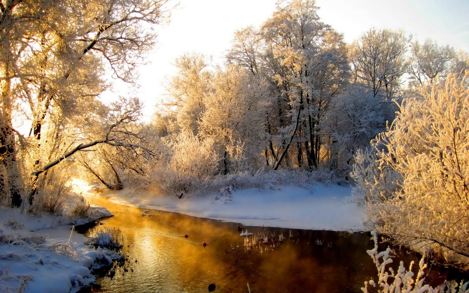 13 free nature 3d wallpapers backgrounds for Foto inverno per desktop