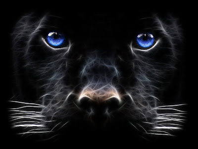 Animals Wallpaper - Big Cat