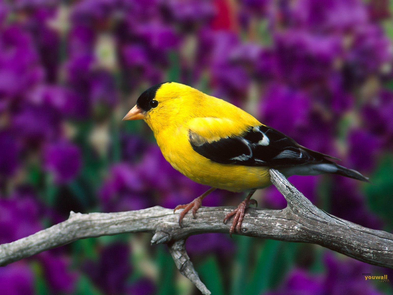 Unique Animals blogs: Birds Desktop Wallpapers, Bird Beautiful