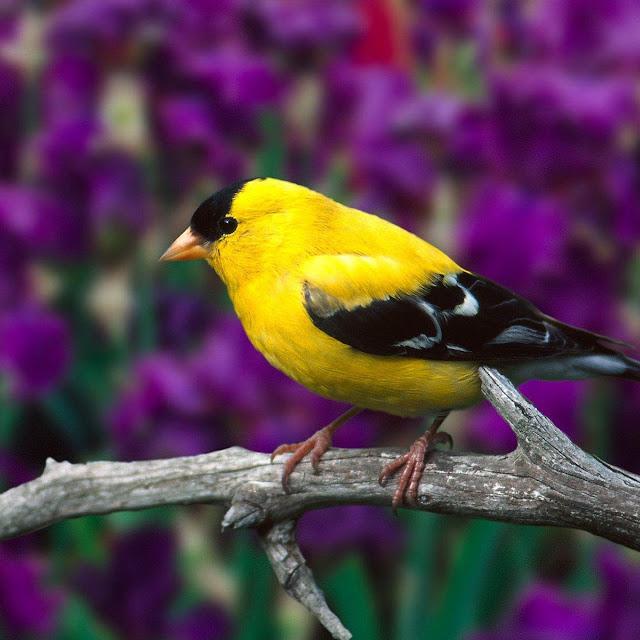 kumpulan gambar cantiknya burung