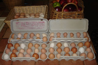 That's a lot of eggs!