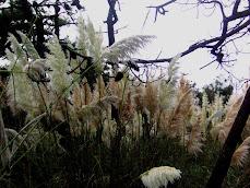 """""""Los Plumíferos"""", cambian la fisonomía de nuestro paisaje."""