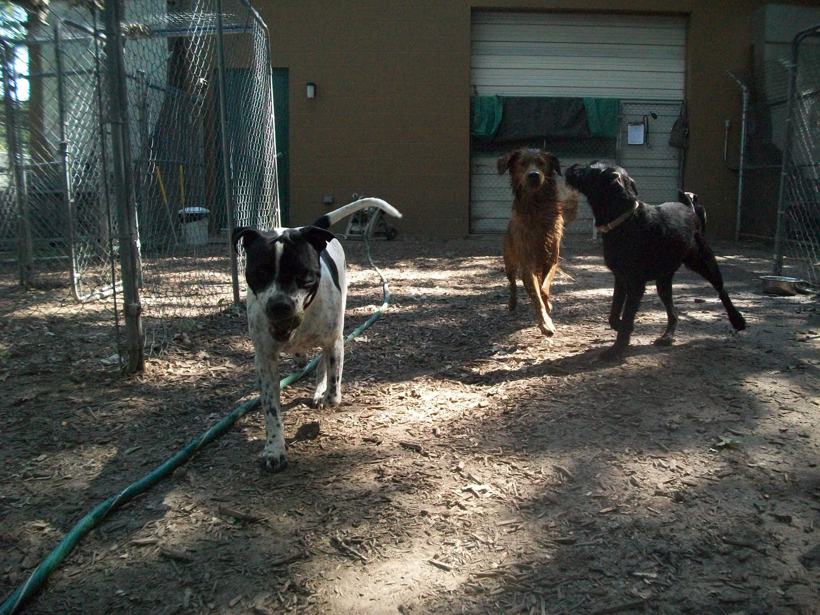Best Friends Dog Boarding Carmel