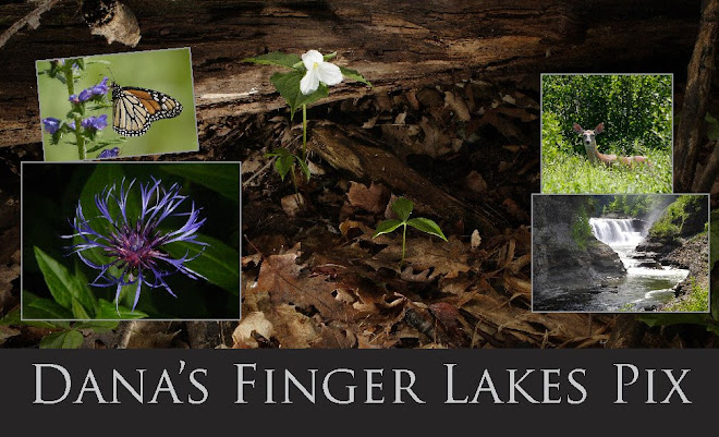 Dana's Finger Lakes Pix