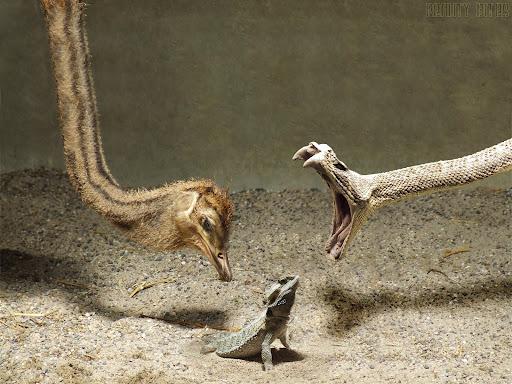 Lizard Wallpaper 02