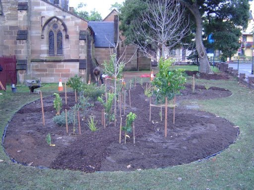 food forest in progress