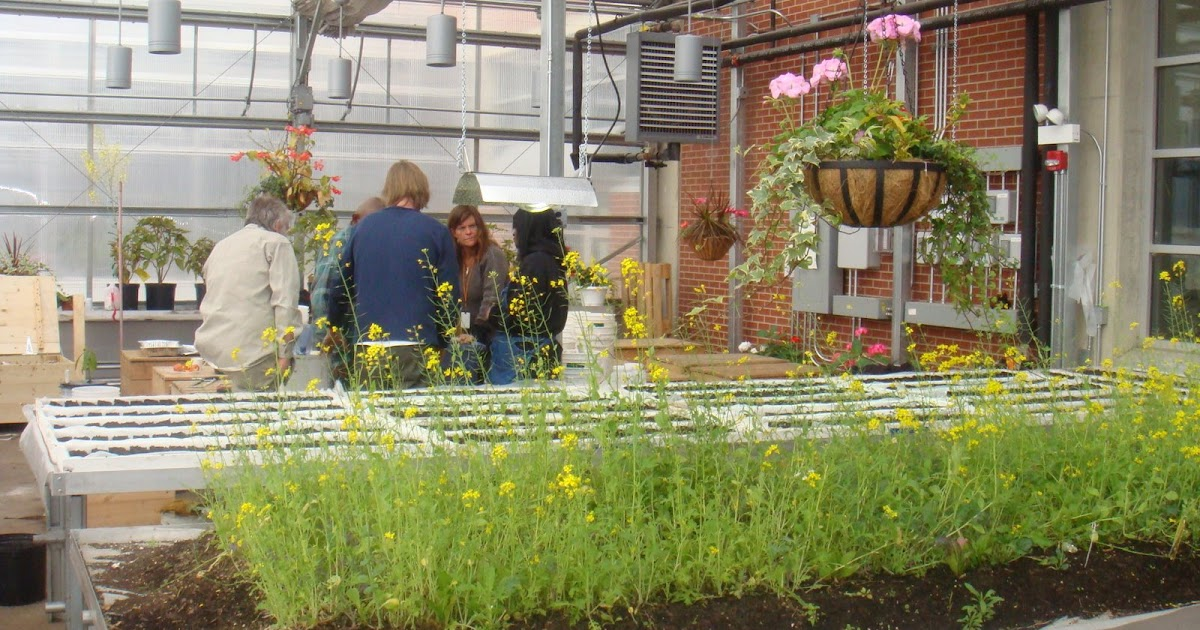 Green Roof Growers Making Sips At Chicago 39 S Greenhouses Of Hope