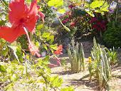 minha horta-jardim