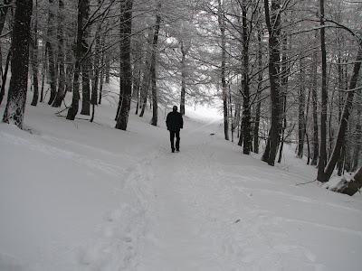 pasul bratocea decembrie 2008