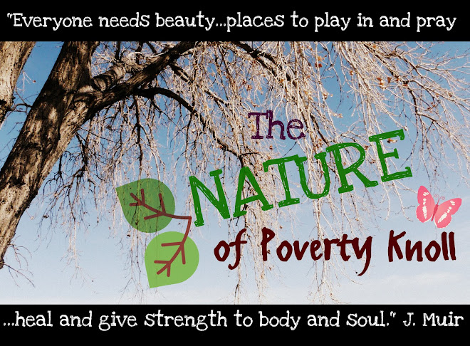 The Nature of Poverty Knoll