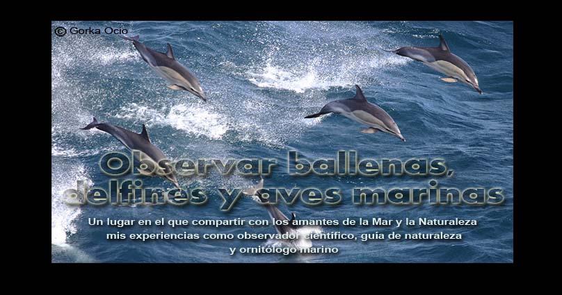 Verballenas.blogspot.com