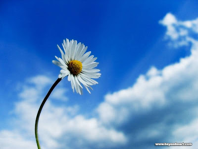 Flower Sky Wallpaper Image Photo Pic