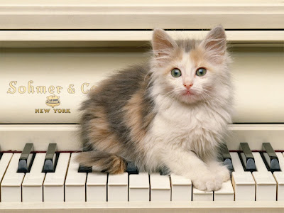Download Free PC Wallpaper of Cute Cats Image : Cat on Piano