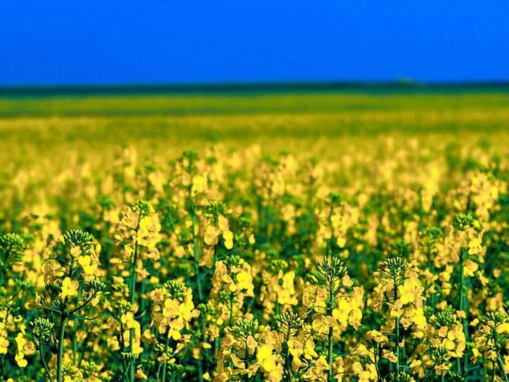 flores no jardim de deus : flores no jardim de deus:Campo De Flores