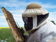 Productores Apícolas - Miel y derivados