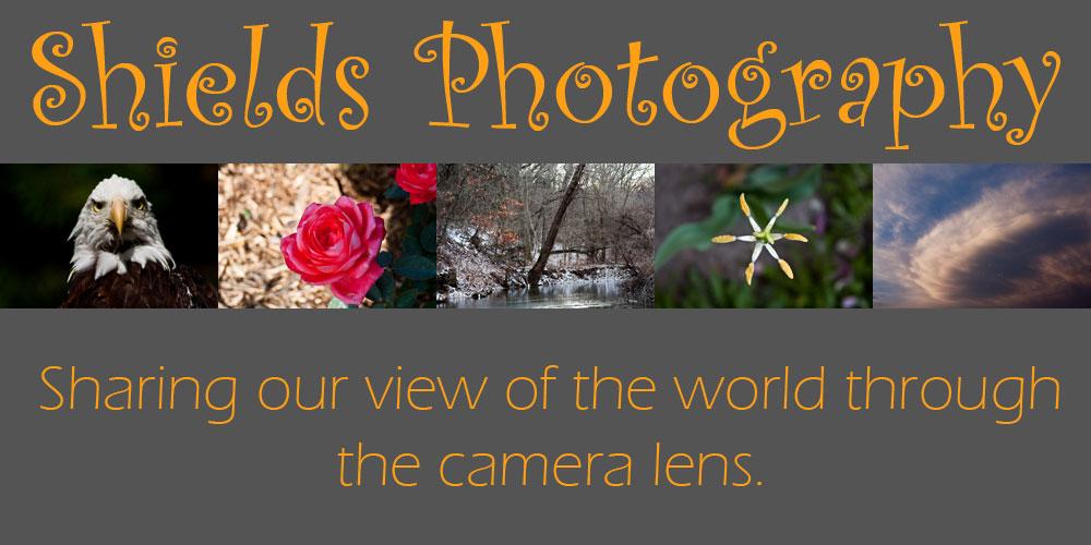 Shields Photography