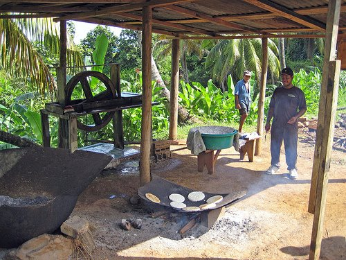 Kalinago making Cassava Bread