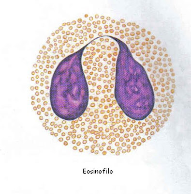 Eosinofilo Photos Of An Ear
