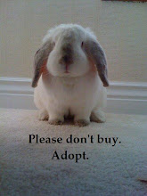 HOW TO CARE FOR YOUR HOUSE BUNNY-ebook.