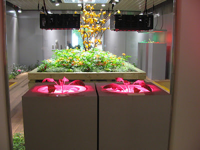 Underground Urban Farm In Japan (9) 1