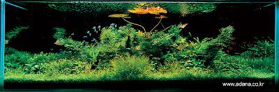 Aquarium Art 4