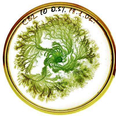 Petri Art (11) 8
