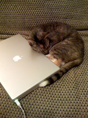 cat pushing notebook while sleeping