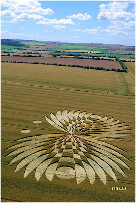 Beautiful art in the fields (10) 2