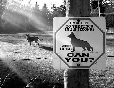 Funny Dog Signs (14) 1