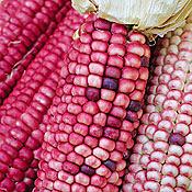 Pink flour corn
