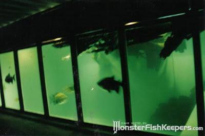 tank aquarium (6) 1