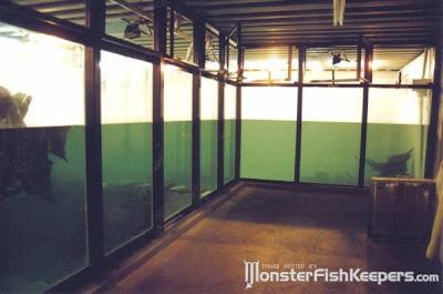 tank aquarium (6) 3