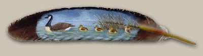 Feather Paintings (21) 4