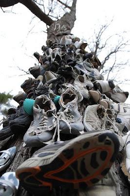 Shoe Trees (36) 23