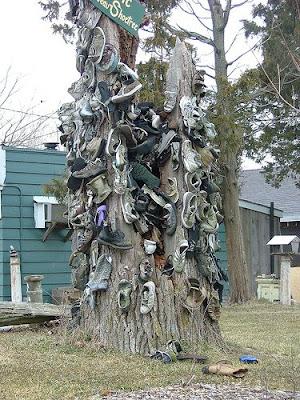 Shoe Trees (36) 22