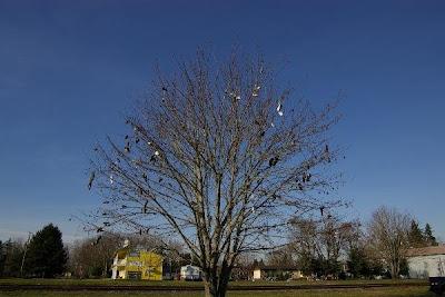 Shoe Trees (36) 17