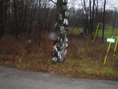 Shoe Trees (36) 19