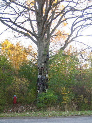 Shoe Trees (36) 26