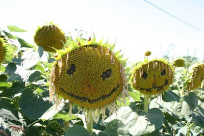 Artistic Sunflowers (8) 3