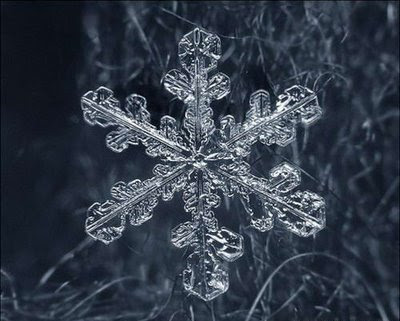 Beautiful Snowflakes (21) 11