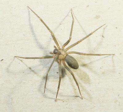 what happens when a spider bites (11) 1