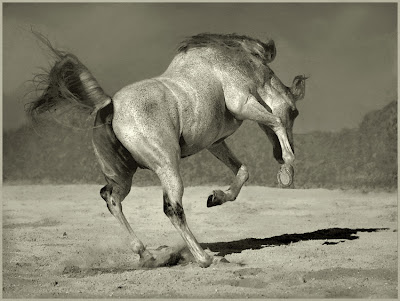 Horse+(13).jpg