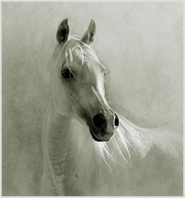 Horse+(14).jpg