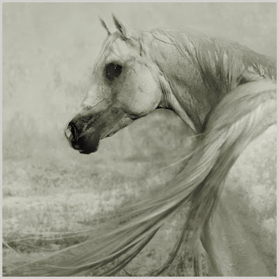 Horse+(2).jpg