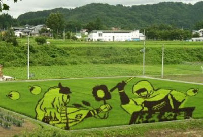 Beautiful Rice Field Art 15