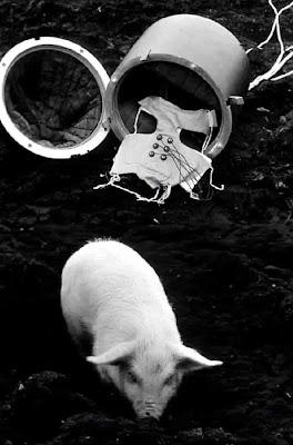 Pig In Space16